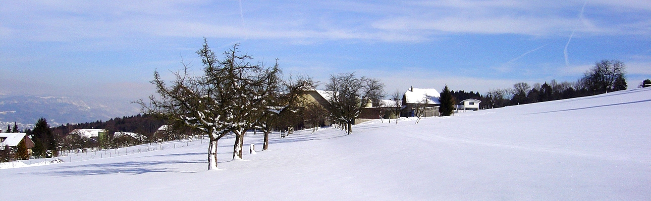 Obstbäume im Winter